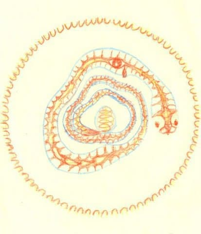 Testimonio de un proceso con Mandala Intuitivo